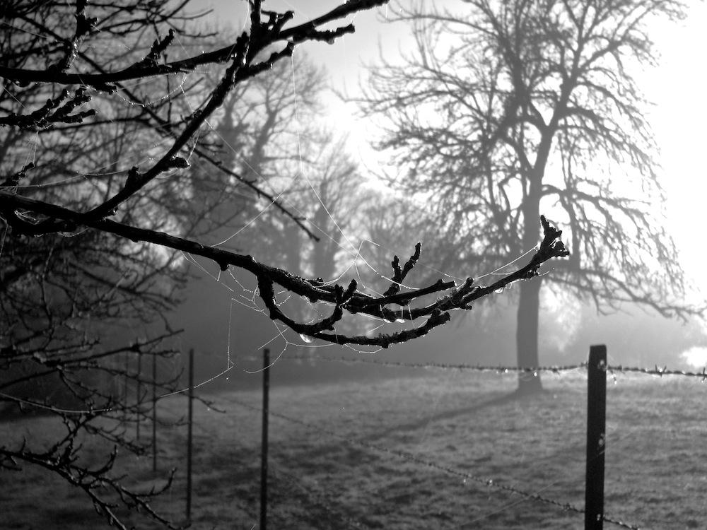 L'arbre pleure à froides larmes