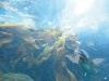 au-fond-des-oceans-un-monde-30x40