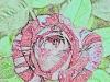 rose-dessin